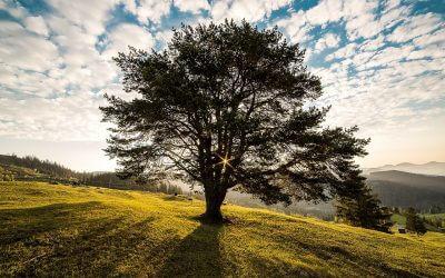 Ein Baum prägt das Bild seiner Umgebung