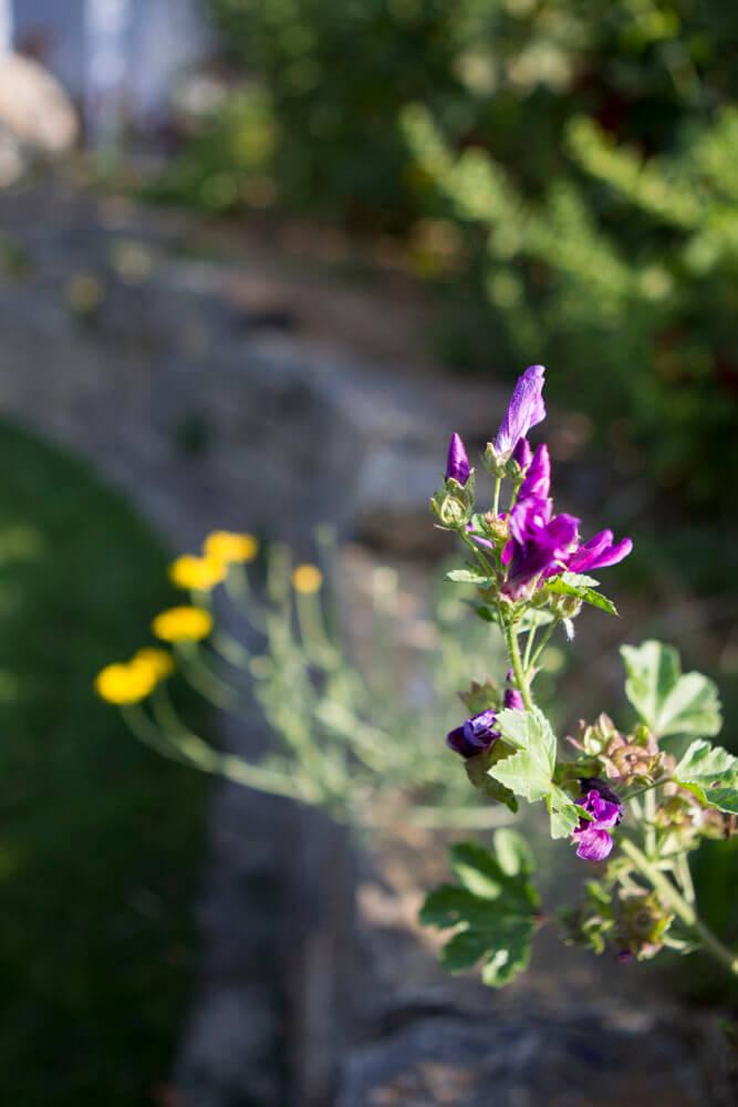 Blüten im Detail