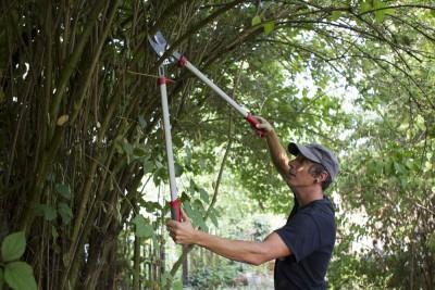 Gartenpflege - Rückschnitt