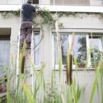 Gartenpflege: Kletterpflanzen an Fassade