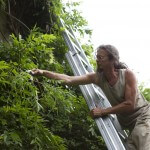 Gartenpflege - Fassadenbegrünung