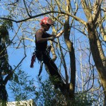 Baumpflege Seilklettertechnik